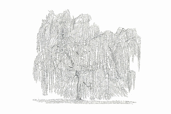 "<img src=""http://pinnerartsweek.com/app/uploads/2016/07/Palette.png"" alt=""Palette"" width=""23"" height=""20"" class=""alignnone size-full wp-image-1156"" /> Tree Drawing Workshop"